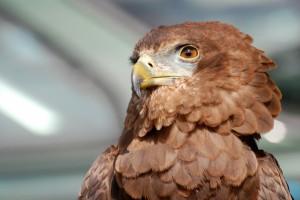 eagle-354255 1920