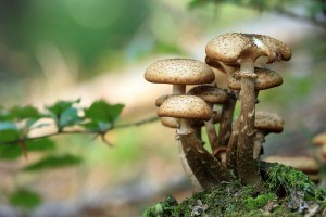 mushrooms-548360 1920