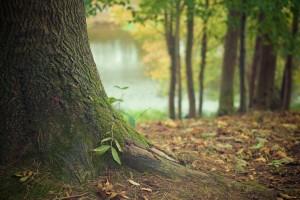 tree-trunk-569275 1920